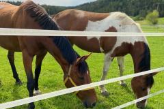 Ferienhof Pferde Kroki Sternchen