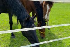 Ferienhof Pferde Schnuffel Kroki Sternchen