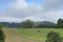 Koppeln Landgut Dreiburgenland Bayerischer Wald