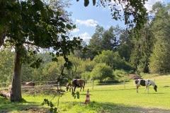 Pferde Koppeln Landgut Dreiburgenland 2
