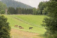 Pferde auf der Koppel Reiterhof