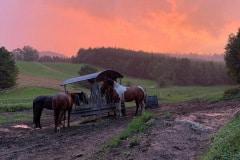 Sonnenuntergang Koppel Pferde