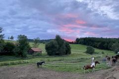 Sonnenuntergang Koppeln Pferde Landgut Dreiburgenland