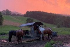 Sonnenuntergang rot Koppel