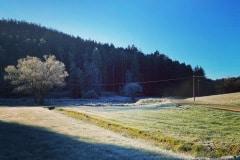 erster Frost auf den Koppeln