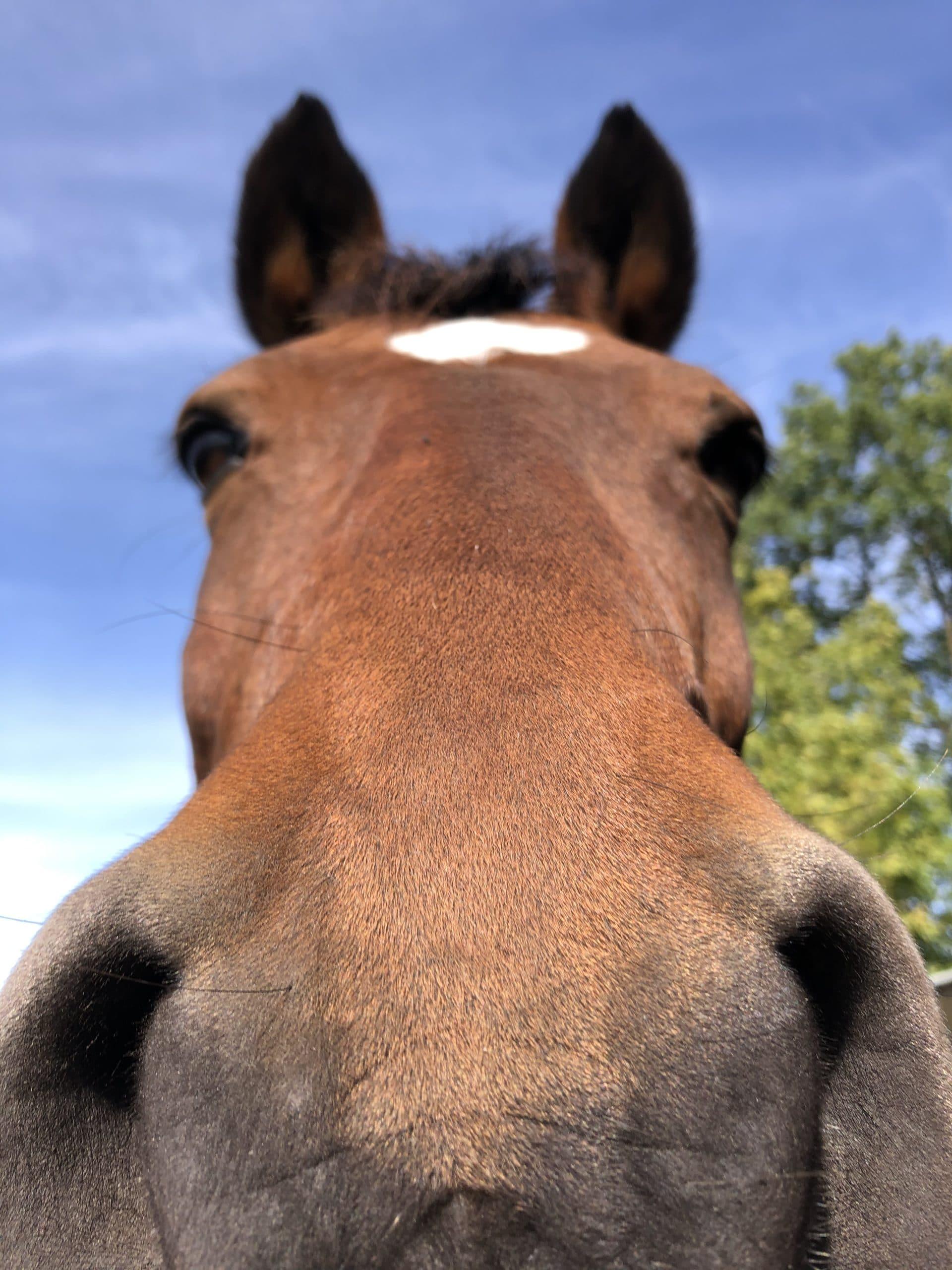 Nahaufname von unserem Pferd Don-Diamant
