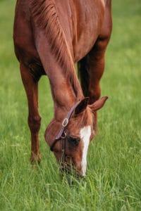 Pferd: Ariadne