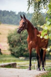 Pferd: Sit