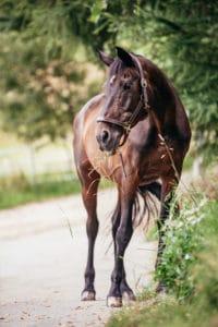 Pferd: Lyra